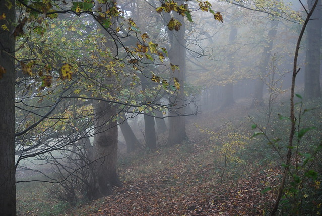 Mist among the trees ...