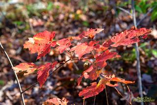 Fall Trip Day #1- 0581
