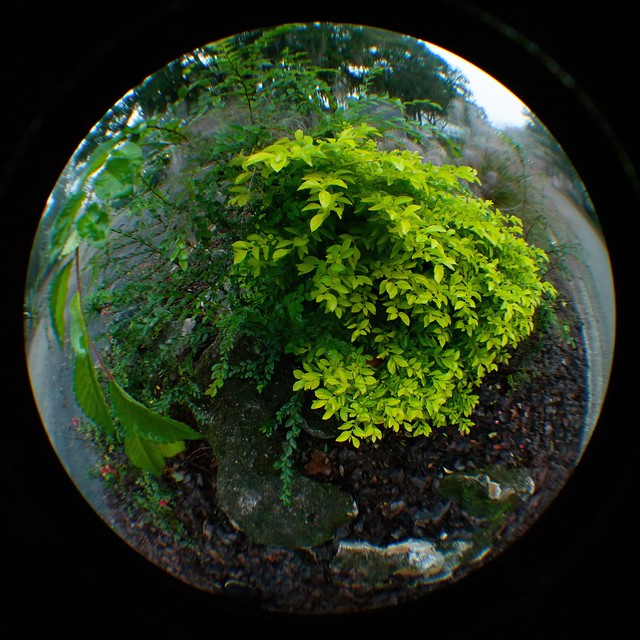 Helder Fisheye Conversion Lens Test
