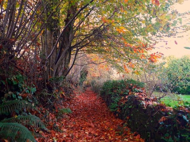 Passage d'automne, fall path🍁🍁🍁🍁🍁