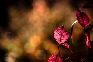 Autumn in Red | by NathalieSt