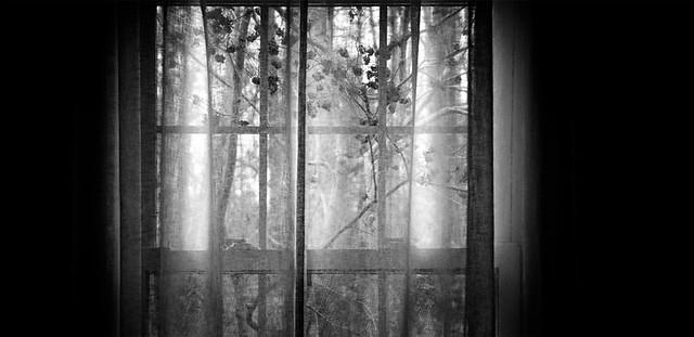winterberry window