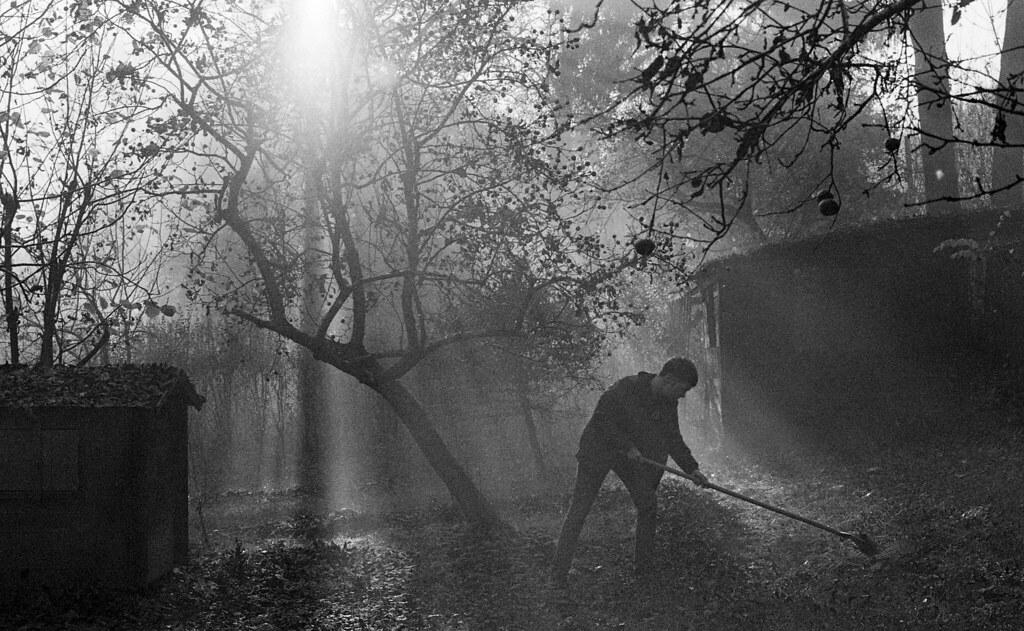 autumn raking