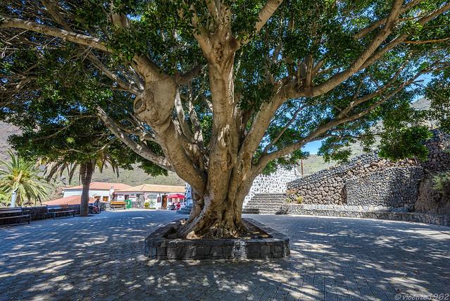 Tenerife III