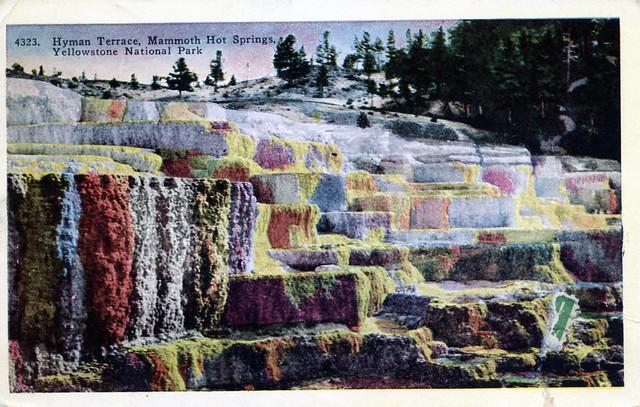 Hyman Terrace Mammoth Hot Springs Yellowstone National Park WY