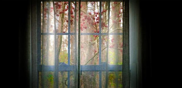 winterberry window :: 2
