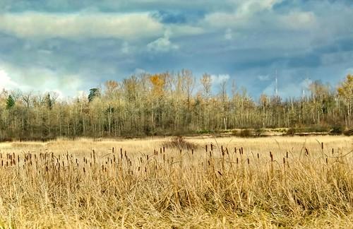landscape dramaticsky grass reeds tree trees scenic aldergrove undeveloped