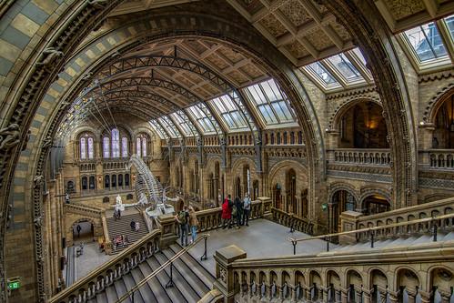 londra london history naturalhistoymuseum museo museum nikon nikond7100 aristodemo