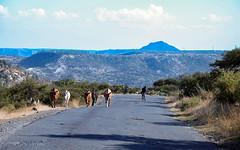 Eritrea 2006