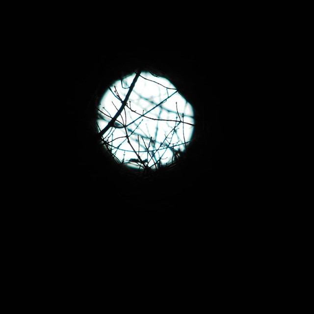Moon, through tree