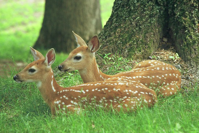 {} Spring Fawns Moment {}