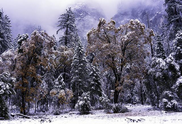 Winter Trees in Yosemite National Park