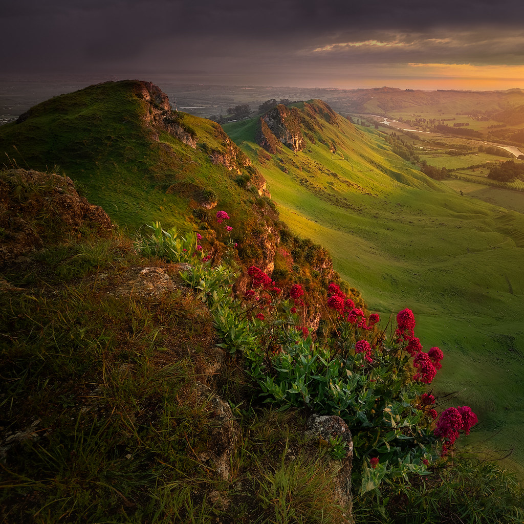 Red Flowers and Green Hills