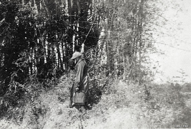 Бамбуковая роща в Нанкине