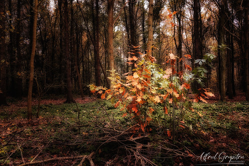 In The Light Of Autumn