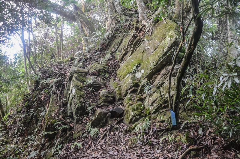 小東河山稜線大岩塊腰繞段 (3)