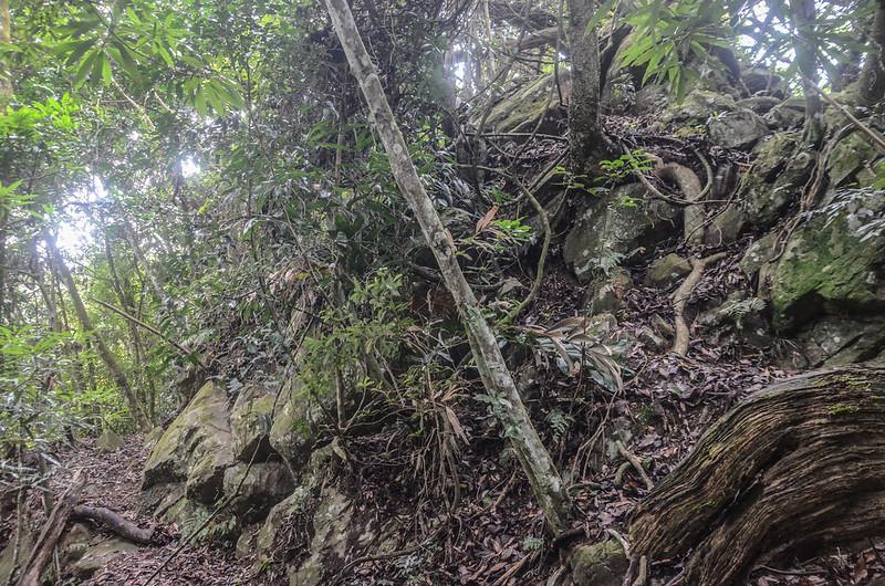 小東河山稜線大岩塊腰繞段 (1)