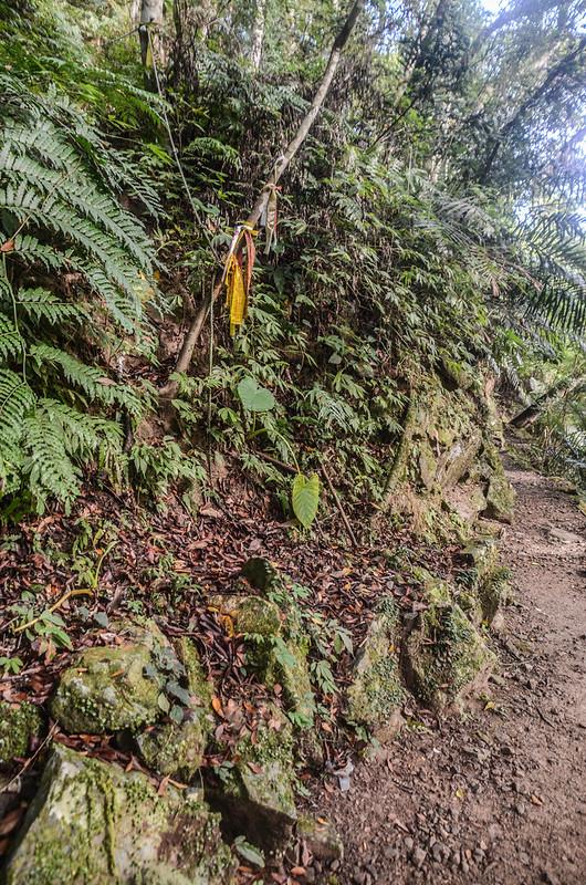 小東河山山徑切入口