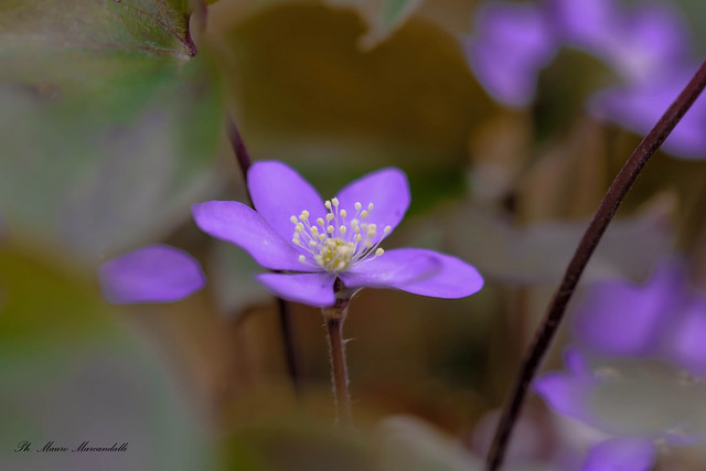 Ricordo di primavera