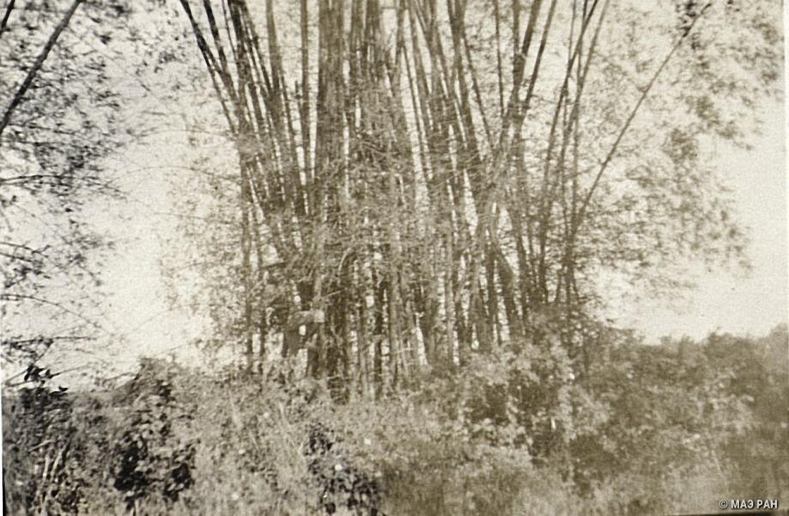 Бамбуковая роща в Нанкине (2)