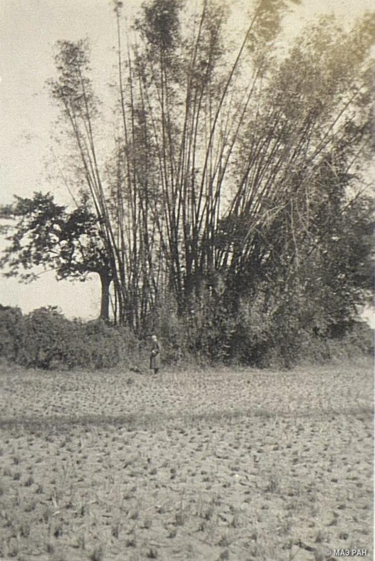 Бамбуковая роща в Нанкине (3)