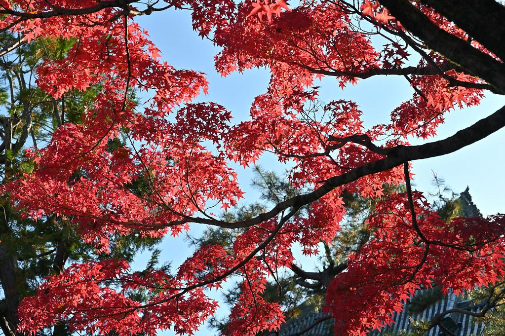 真如堂の秋