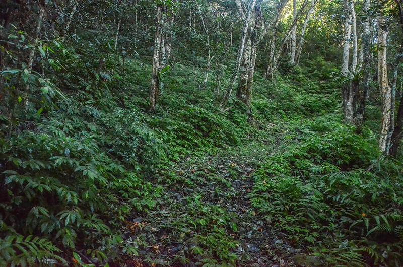 石壁山登山山徑 (2)