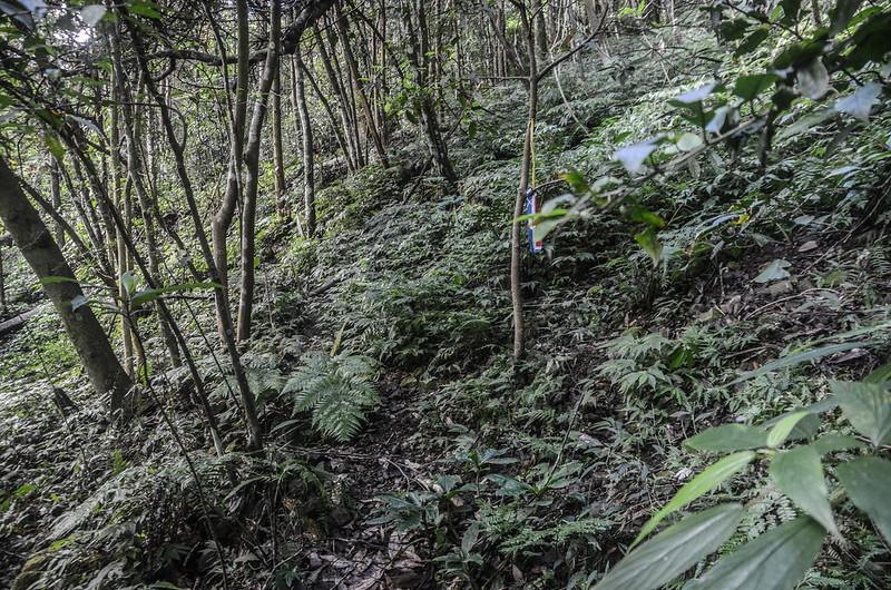 小東河山山徑植被 (1)