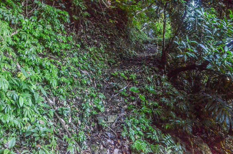 石壁山登山山徑 (1)