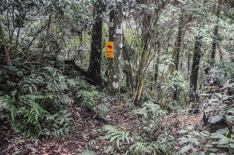 小東河山、容園山莊第一登山口岔路