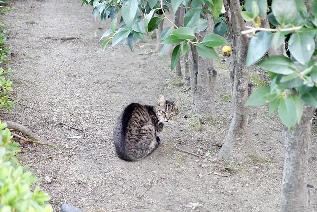 Today's Cat@2020−11−15
