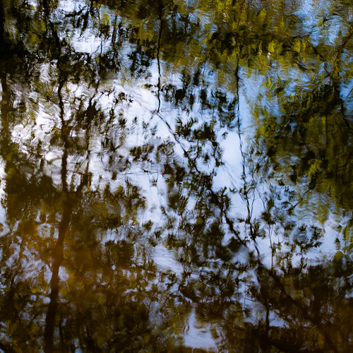 captaindanielwrightwoods d5000 desplainesriver nikon abstract branches distortion forest leaves natural noahbw quiet reflection ripples river square still stillness summer trees water woods
