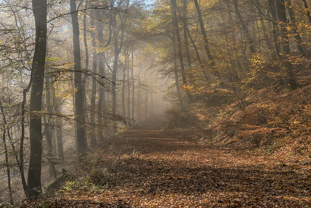 *Autumn dreams in the Eifel forest II*