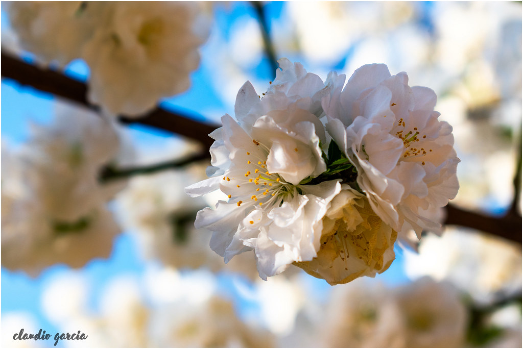 Tranquilidad primaveral / Spring tranquility