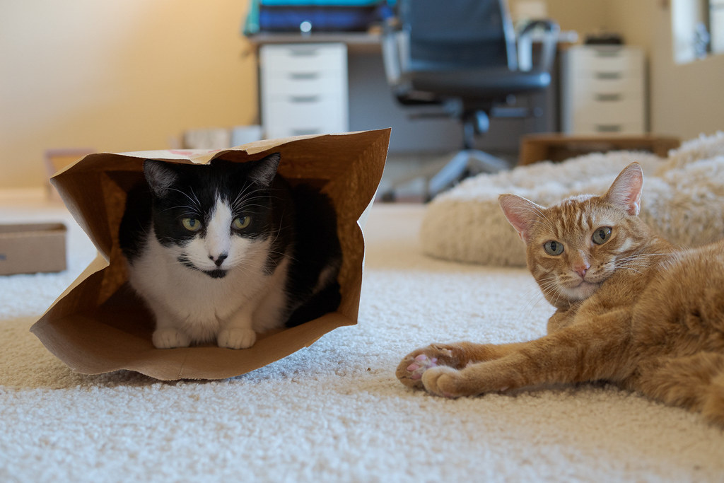 Our cat Sam lies down beside our cat Boo as he sits in a paper bag on November 4, 2020. Original: _RAC7848.arw