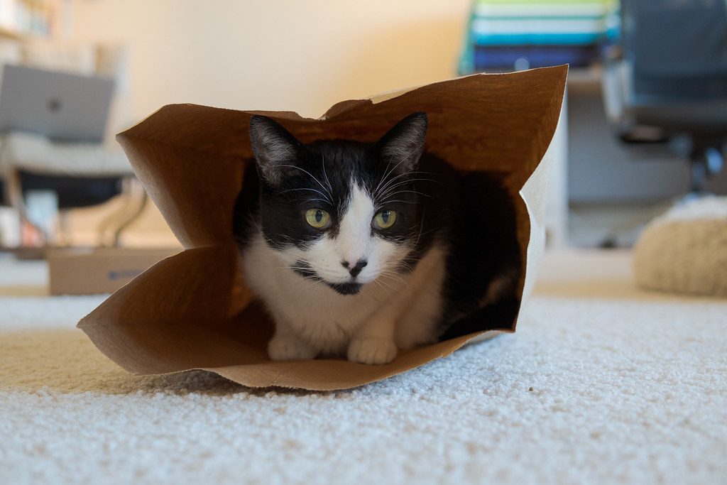 Our cat Boo sits inside a paper bag on November 4, 2020. Original: _RAC7828.arw