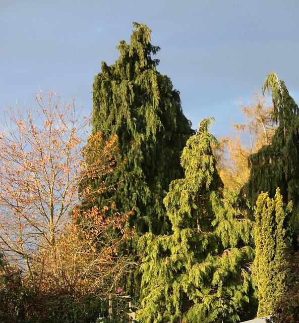 Sunlight on Trees - Autumn 2020