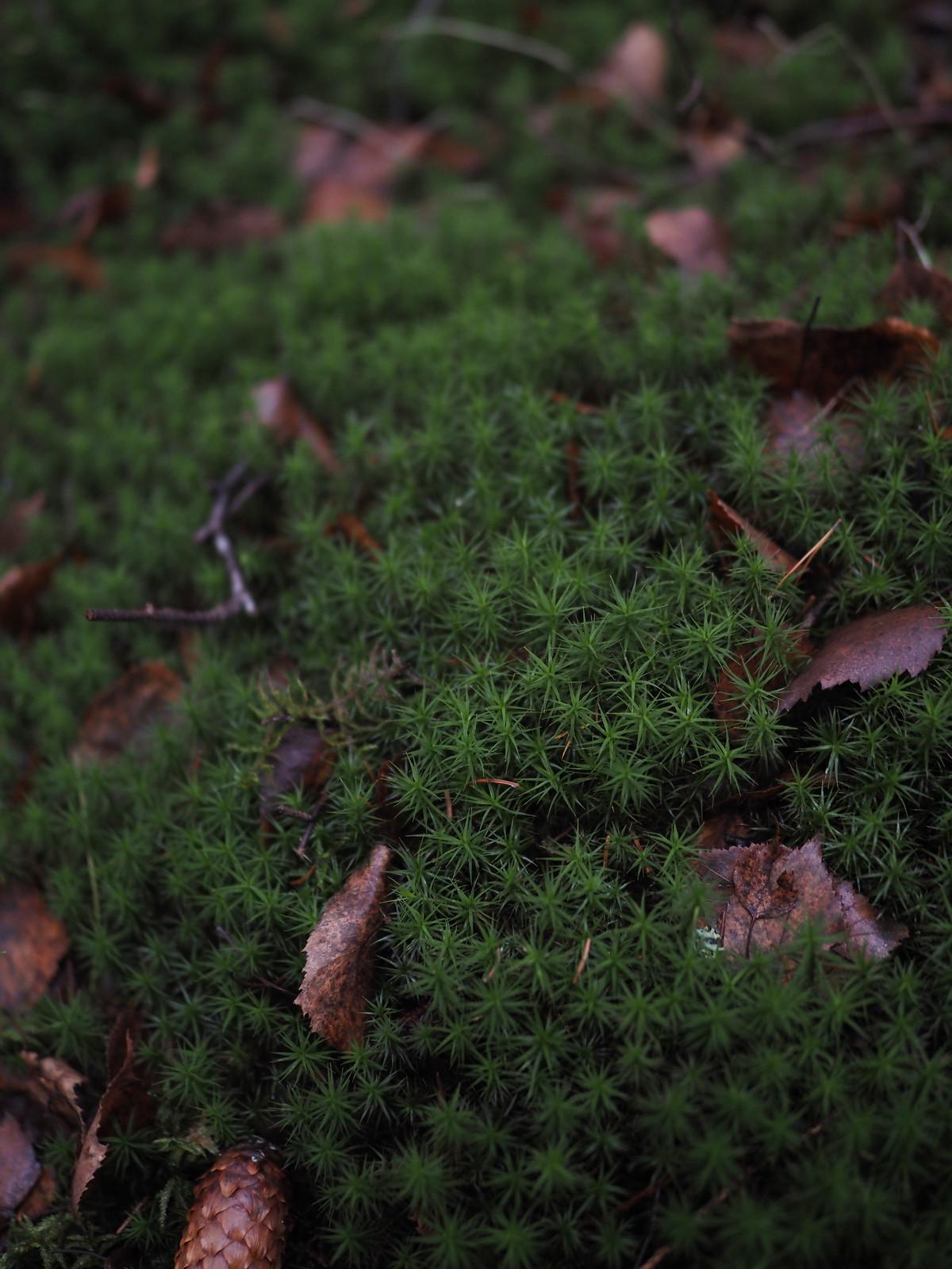 metsäkylvyssä