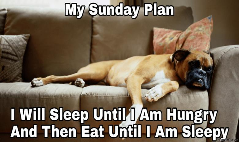 my-sunday-plan-i-will-sleep-until-i-am-hungry-and-then-eat-until-i-am-sleepy-meme-6332