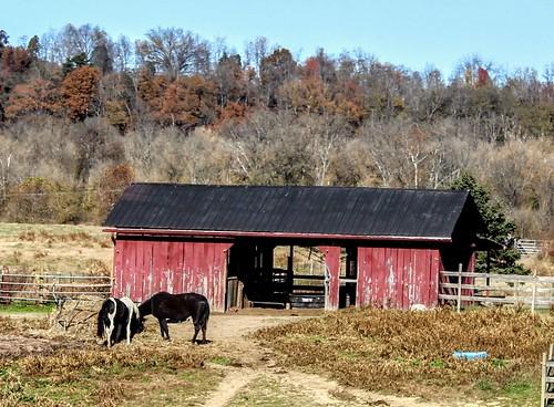 horse horses barn barns redbarns pastures livestock farmland landscape canon