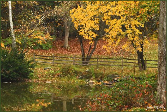 October - Autumn foliage in the pasture