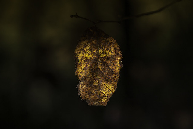 Autumn leave at Sunrise