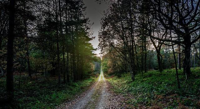 Follow the light......