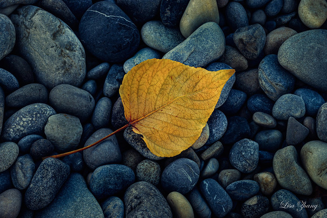 Yellow falling leaf
