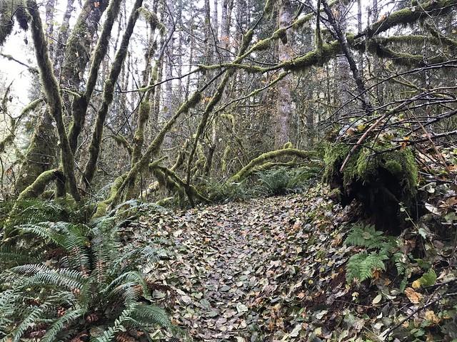 Step creek