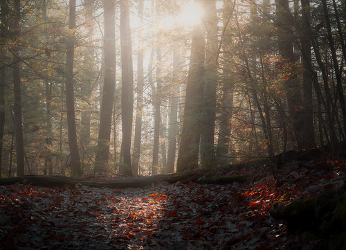 outside outdoors nature cold chilly light sunlight woods forest trees rural pennsylvania poconos early sunrise misty mist landscape autumn november pa roadtrip travel vacation sony alpha a7riii ilce7rm3 sigma art lens 2470mmf28dgdn|a fog leaves 2470mm standardzoom delewaregap nps nationalparkservice park hiking adventure