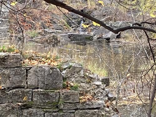 Wappingers Falls / Poughkeepsie 2020-11-15