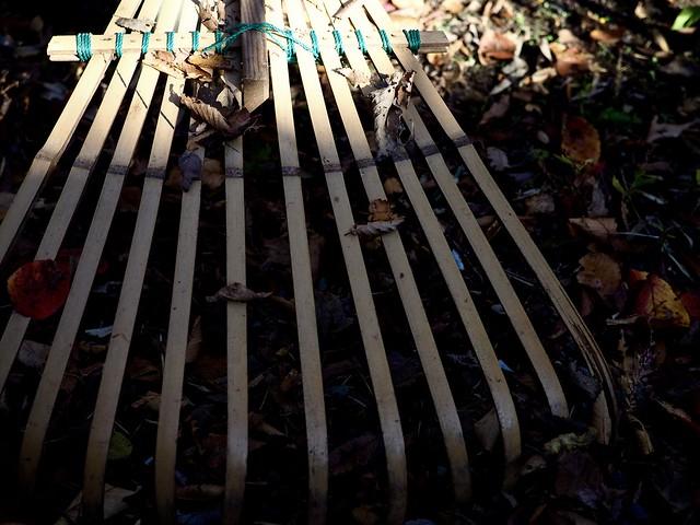 2020.11.14 落ち葉掃き