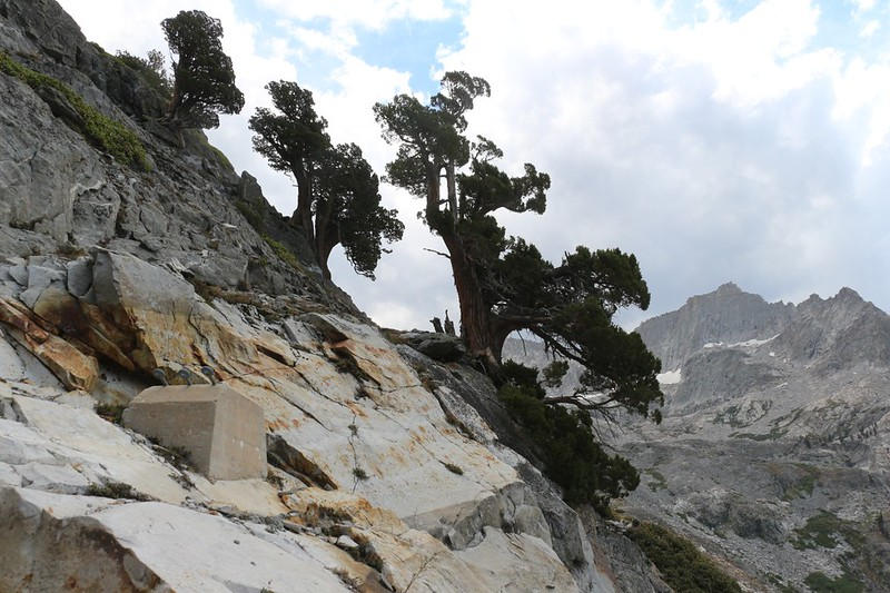 Sierra Junipers on a steep slope above an old Bridge Pier (left) and Eagle Scout Peak (right), from the High Sierra Trail