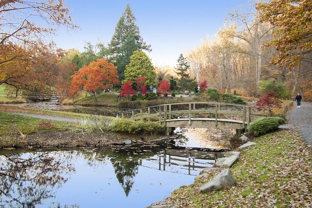 Brookside Gardens Nov 10 2020 (646)